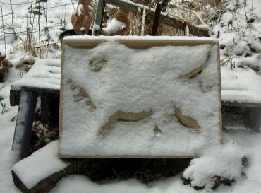 Snowy Roman Griffen, Kansas Creme Limestone Sculpture by Martin Cooney, Stone Sculptor