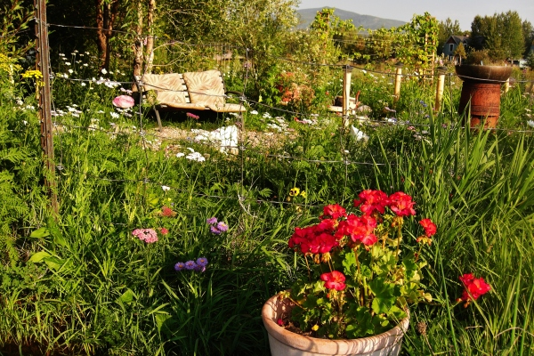 No two summers are ever the same in the Rocky Mountain English Country Garden.