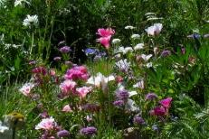 Wildflowers Go Wild at the Colorado Rocky Mountain Sculpture Garden.