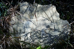 Gemsbok Drift, Kansas Creme Bas Relief Sculpture by Martin Cooney