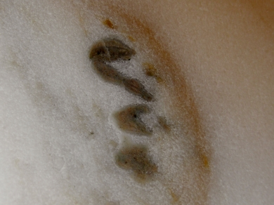 Salamander detail, Constellation, The Maiden Collection, Colorado Yule Marble Sculpture by Martin Cooney