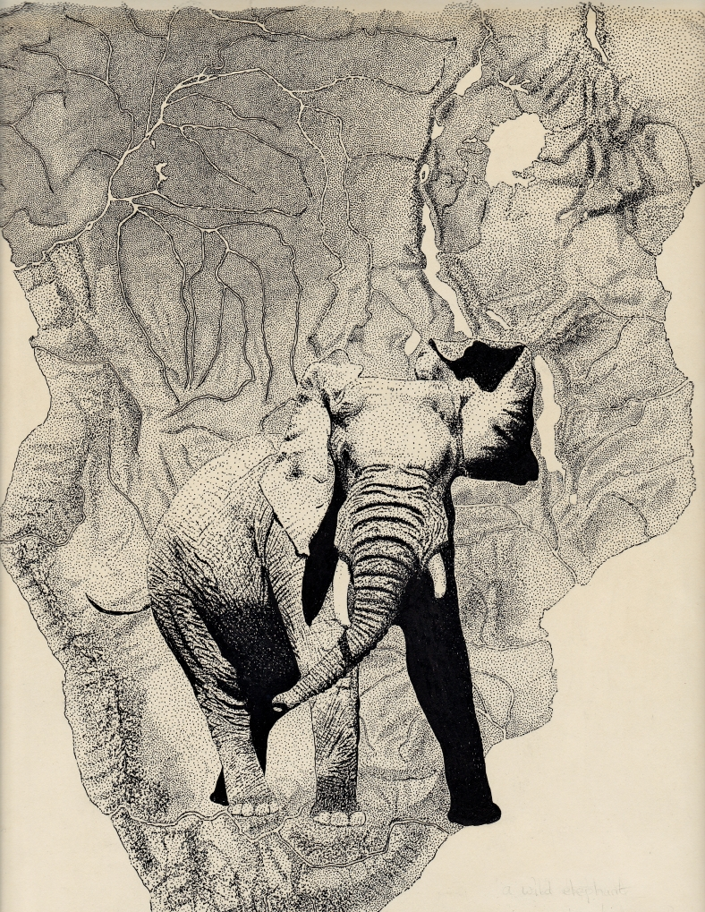 Elephant / Pen and Ink