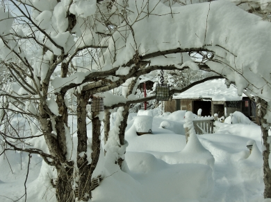 Birdhaven Workshop Studio, View along The Arbor, Woody Creek CO. The Deep Winter Snowscape, Part Two 2014 02 10