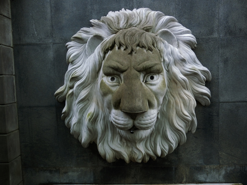 Lenny, The Fifth Lion of Massa, Tuscany, Italy
