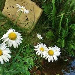 'elky', Daisies at the studio of MARTIN COONEY