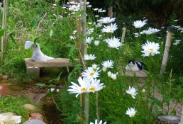'Miss Kitty', Daisies at the studio of MARTIN COONEY, 8 Miles North of Aspen, CO