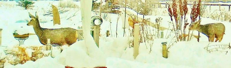 widescreen Deer Family Passing Through the Sculpture Garden, Sunday December 28, 2014, 3:04 to 3:17 PM