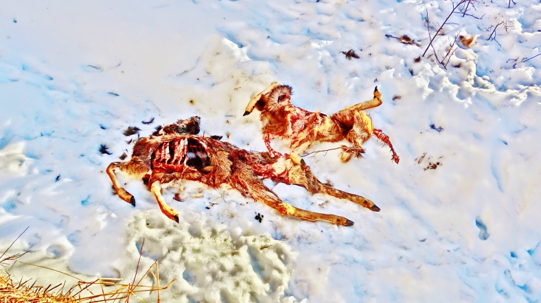 Deer remains, Rio Grande Railbed Trail, Snowmass Canyon, CO