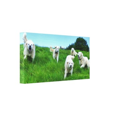 Five Angry Italian Sheepdogs, Wrapped Canvas Print, 18 x 9, left