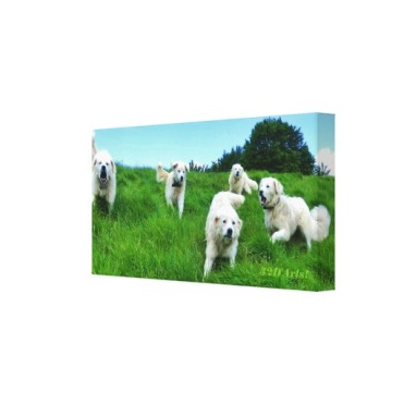 Five Angry Italian Sheepdogs, Wrapped Canvas Print, 18 x 9, right