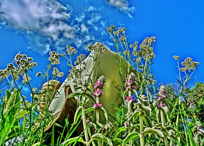 Mabel, Lamb's Ear Flowers