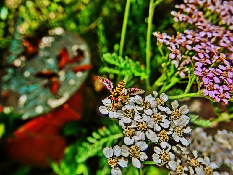 Pollinator Survivors