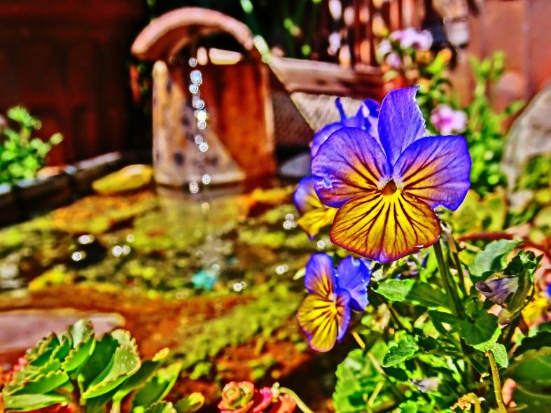 Viola Fountain