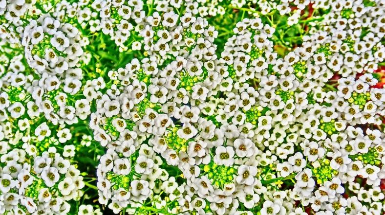 Fizzy Flowers