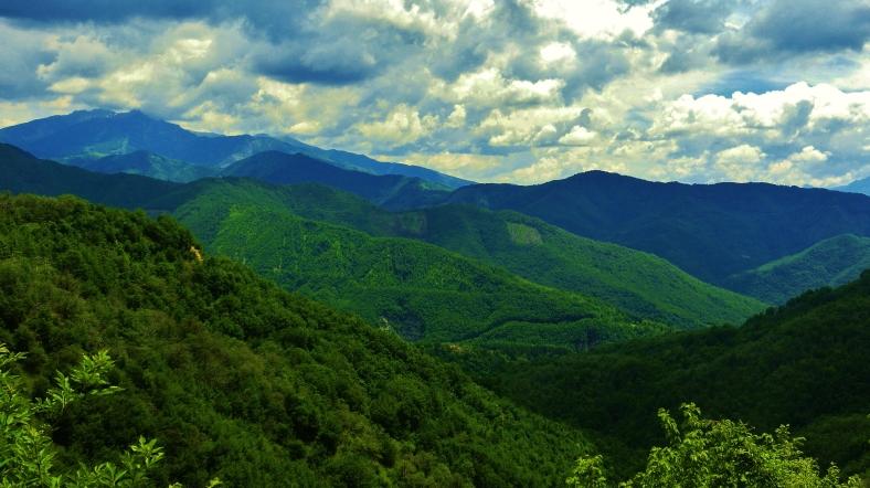 Dense woodland around Montereggio, Lunigiana, on the North West Tuscan Way, Italy