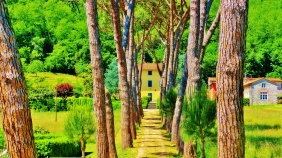 Tree-lined Driveway near Ripafratta, Countryside Around Lucca and Pisa