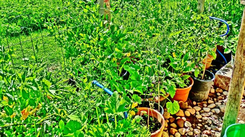 Emerald Greens: August Garden Tour.