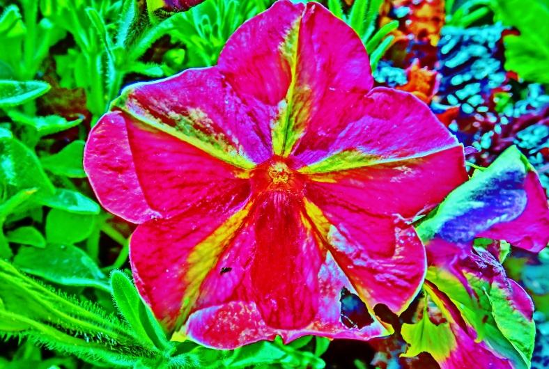 Flower Portraits: Shocking in Pink