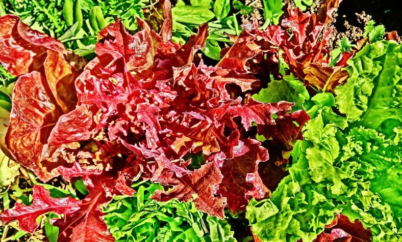 Flower Portrait: Lettuce Eat!