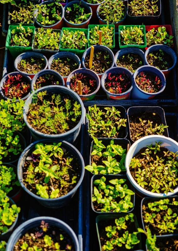 PHOTO BY DRAPER WHITE A salad's worth of tiny greens sprout in a cornucopia of containers.